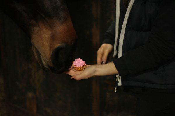 smakołyk dla konia